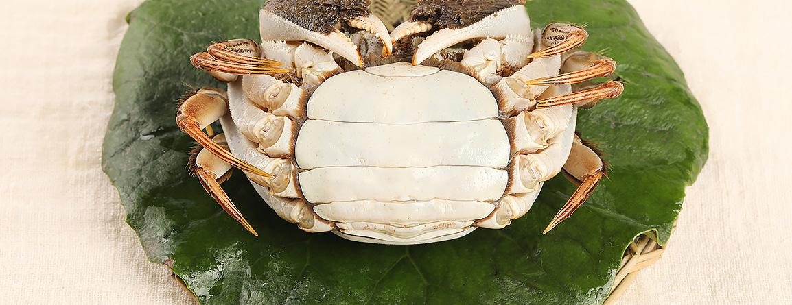 肚壳呈白色,有晶莹的玉质感,没有黑色斑点