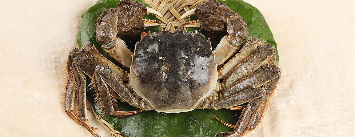 蟹體敦實,肉質飽滿,蟹體與螯、爪間比例協調