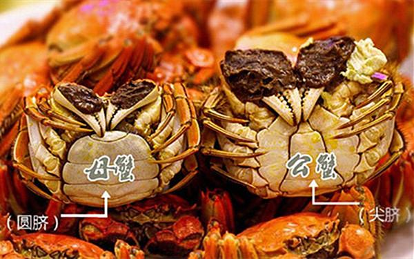 雌蟹与雄蟹