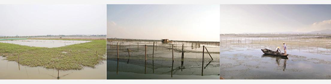 扣蟹养殖基地