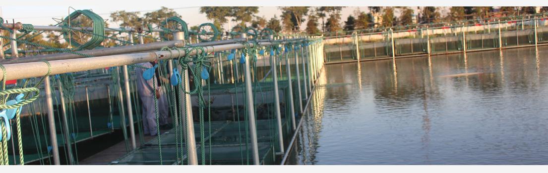 蟹源储备基地